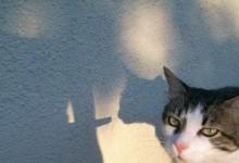 Jouer avec les ombres