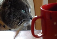 Cat and cup of tea