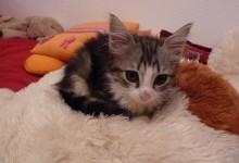 Petit chaton!