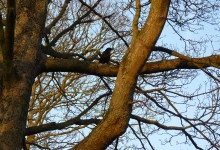17 Février: Standing crow on the sunset