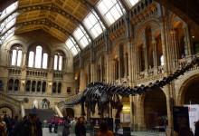 14 Mars: le Musée d'Histoire Naturelle