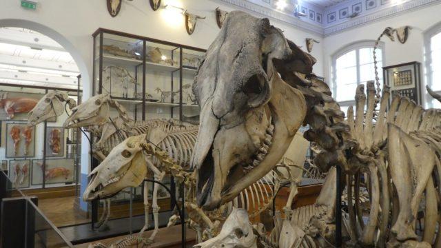 27 février: skeletons