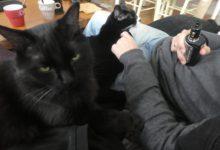 06 Novembre: toujours plus de ptits chats et de café