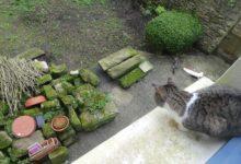 15 Février: rivalité féline (oui, encore des chats)