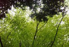 04 mai: ombre et lumière