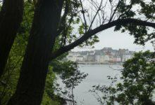 09 Mai: derrière les arbres, le Rosmeur
