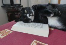 18 Juin: «Lire? Pourquoi? Câline-moi plutôt…»