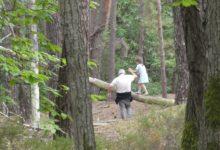 14 Juillet: balade en forêt