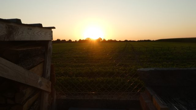 30 Juillet: derniers soleils