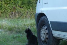 27 Septembre: le pacha du camion
