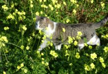 04 Décembre: Osty florale