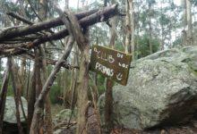 13 Décembre: découverte forestière