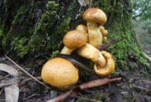 16 Décembre: champignons automnaux