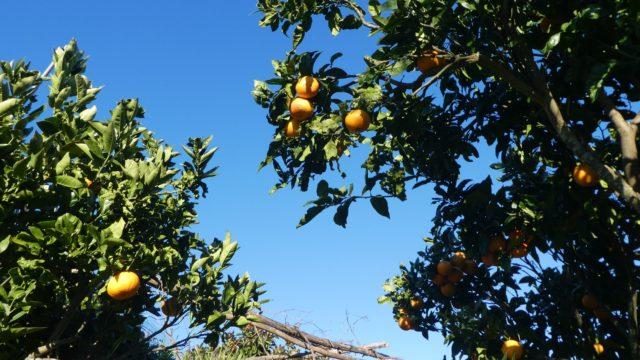 09 Janvier: le plaisir à portée d'arbre