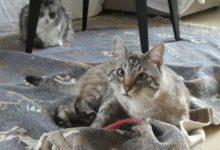 19 Janvier: chats choux