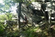 11 Août : forêts ancestrales